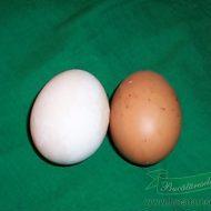 cum albim un ou cu coaja maro